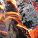 Sintra reforça defesa da floresta contra incêndios